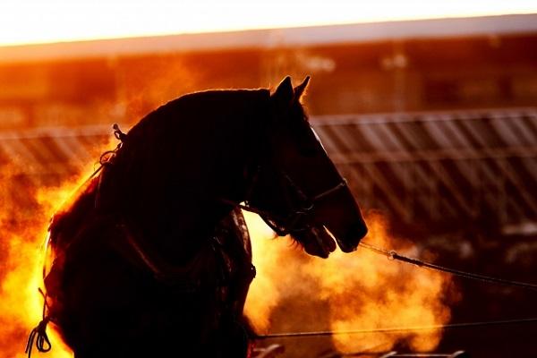 競馬の税金